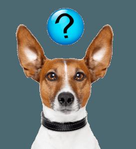 Veel gestelde vragen over buitenlandse honden ter adoptie