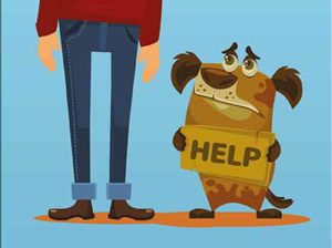 Met een donatie aan honden zonder toekomst helpt u een hond in nood.