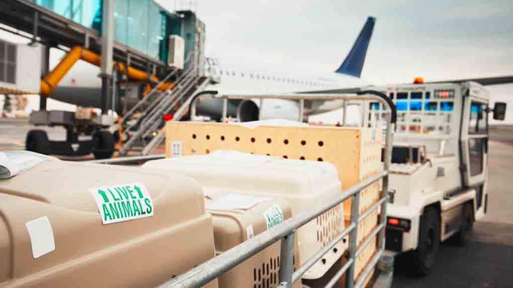 Flugpaten Gran Canaria - Vluchtbegeleiders Gran Canaria